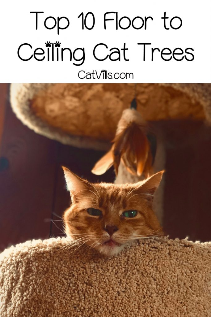 If you're looking for the best floor to ceiling cat trees, I've got you covered! Check out my top 10 favorites, from space-savers to total kitty gyms!