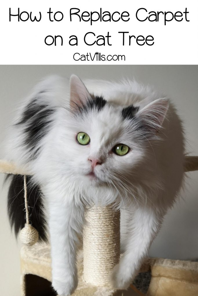Knowing how to replace carpet on a cat tree can significantly expand the life of your kitty's favorite jungle gym. Read on for tips & tutorials!
