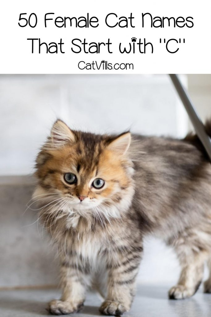 Get ready for some super cute cat names that start with C! We've chosen our top 100 favorites, with 50 each for males and females. Take a look!