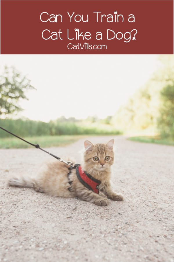 Is it possible to train you cat like a dog? That depends! Find out on what, plus check out our top five tips to help make it easier.