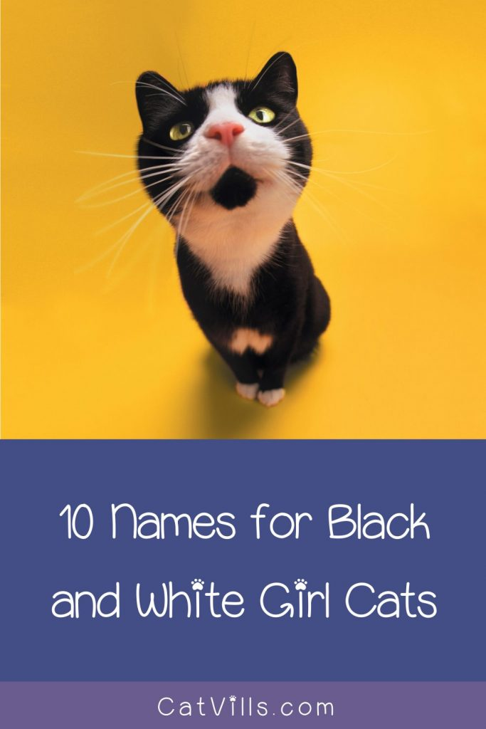 If you're looking for cute black and white kitten names for your new female, this is where you should be.