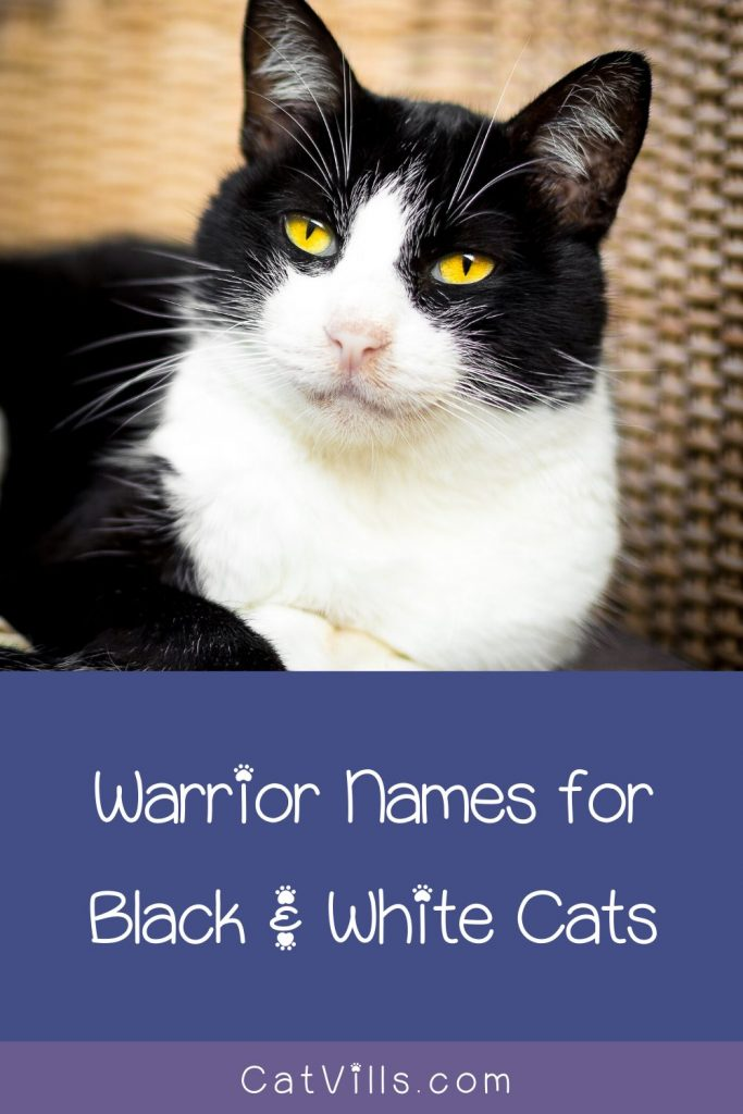 If you're looking for cute black and white warrior kitten names, this is where you should be.