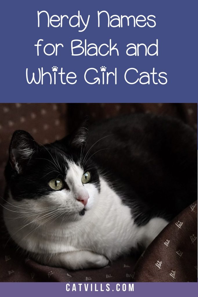 If you're looking for cute nerdy black and white cat names for females, this is where you should be.