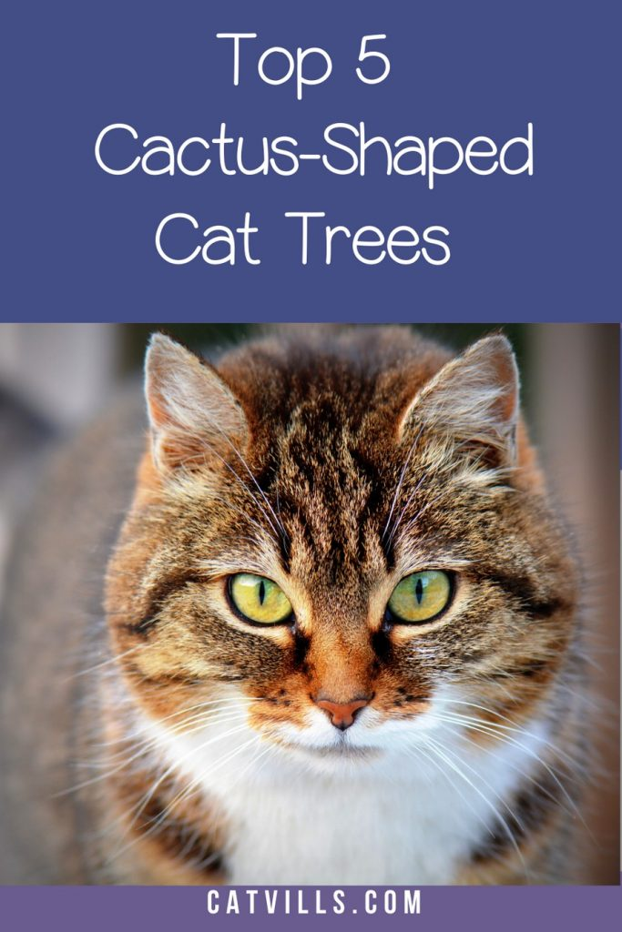 Have you seen that trendy new cat tree that look like a cactus? If you're wondering where to get one for your kitty, keep reading!