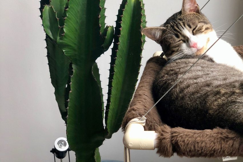 Have you seen that trendy new cat tree that look like a cactus? If you're wondering where to get one for your kitty, keep reading! I've rounded up my favorite kitty cat cacti just for you!