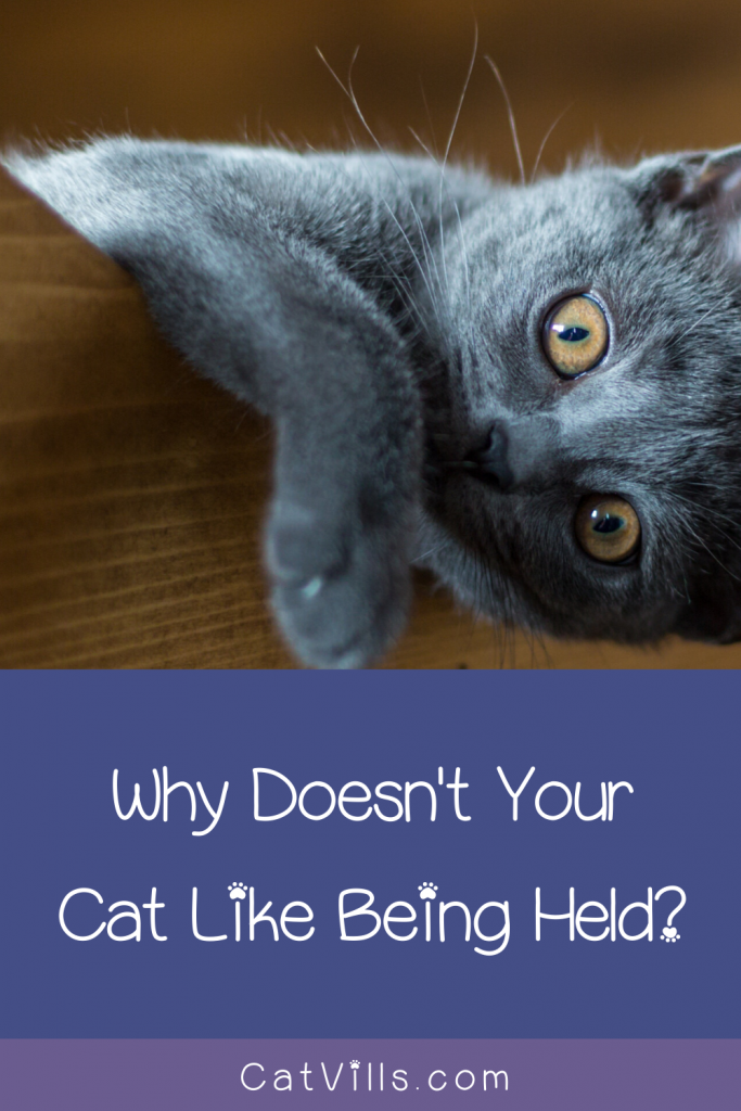 Have you ever wondered why your cat hates being picked up? Worried you're doing something wrong? Read on for 7 reasons why he's just not into your snuggles!