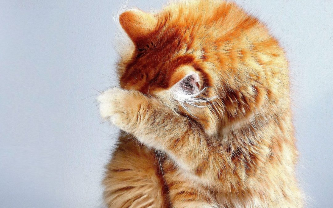 Top 6 Best Litter Boxes with High Sides