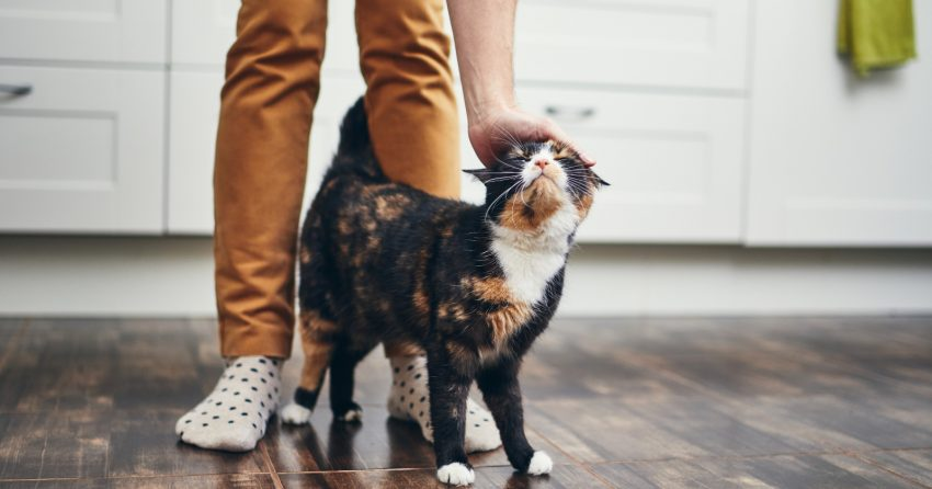 So, your cat is obsessed with you almost a much as you're obsessed with him, and you want to know why. Read on for 9 reasons!