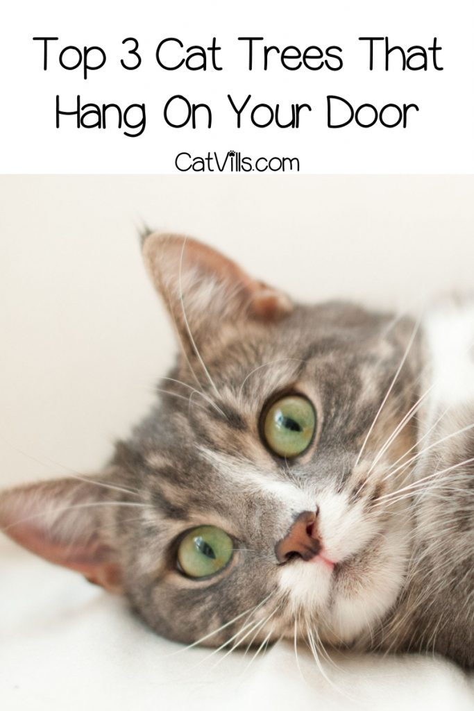 If you're looking for the best cat trees that hang on a door, sadly there aren't many options. That said, I found three that I think are great! Take a look!