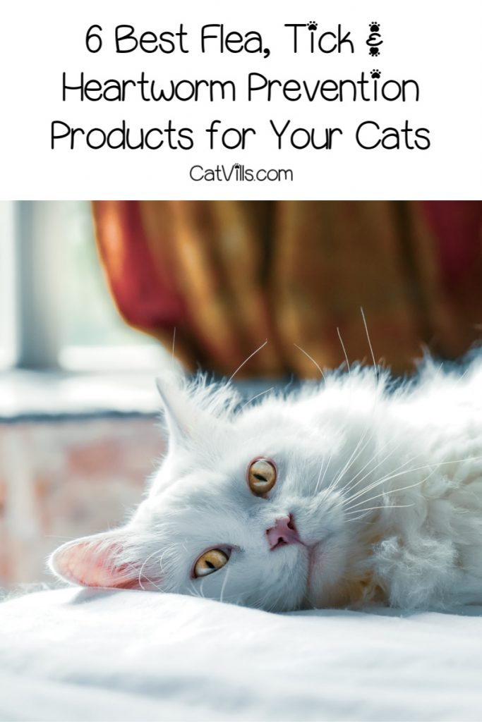 The best flea, tick and heartworm prevention products aren't just something you need to consider in the summer. Use these year round to keep kitty safe!