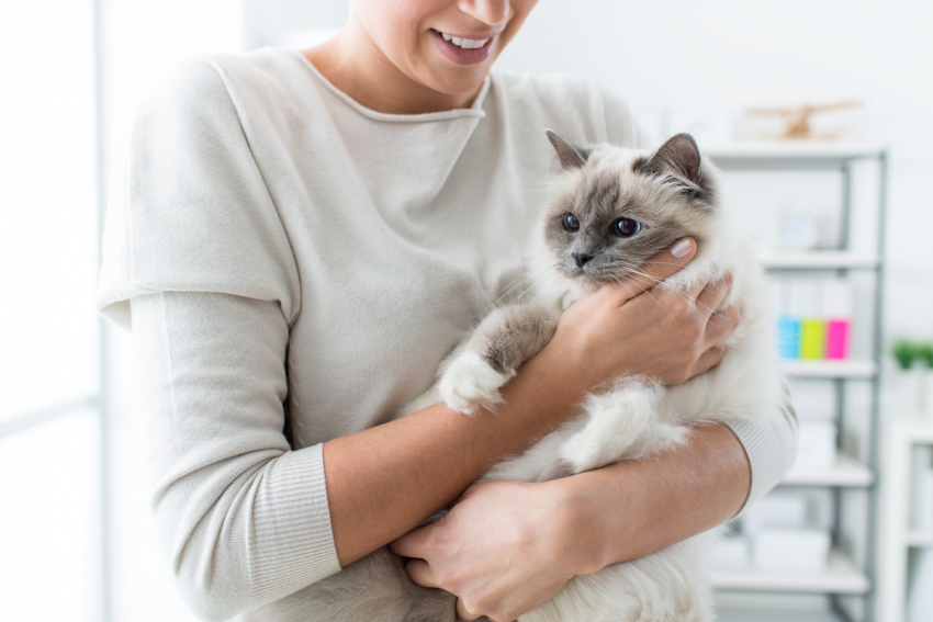 All cat owners love to spoil their furry friends, but have you turned into a slave to your cat? If you're not sure who is the boss in the house, keep on reading to find out.