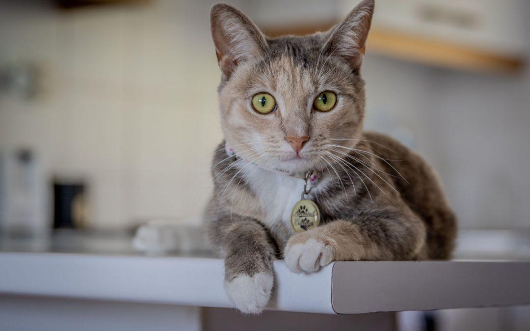 100 Spectacular Spanish Cat Names for Male & Female Kitties