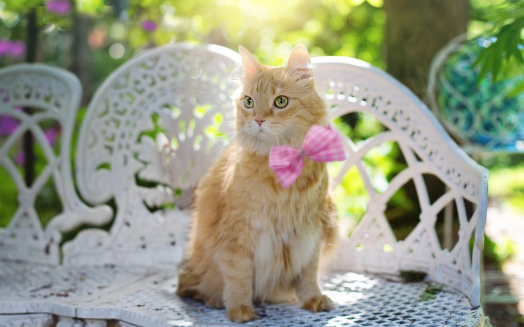 60 Summer Cat Names That Will Make You Feel Warm & Fuzzy!