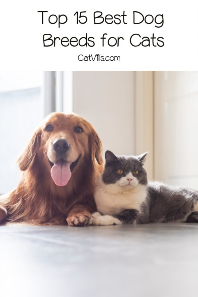 Curious about the best and worst dog breeds for cats? How about the best? Read on to find the answer to both questions!