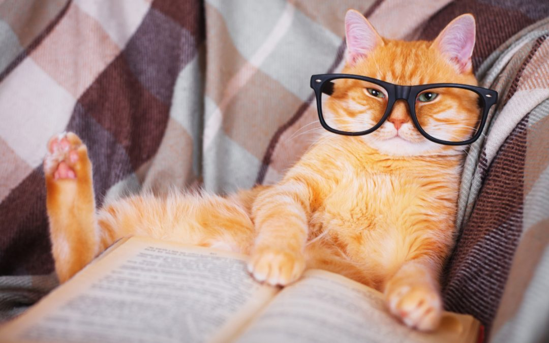 50 Epic Nerdy Cat Names for FanCats