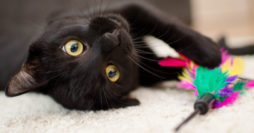 If you're looking for black cat names from movies for your newly adopted cat, then you are going to be very happy about this list. Check it out!