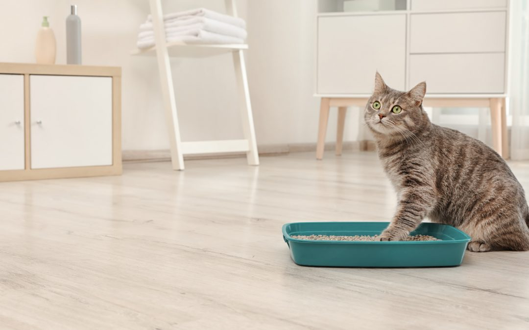 7 Litter Box Hacks Your Cat Wishes You Knew About