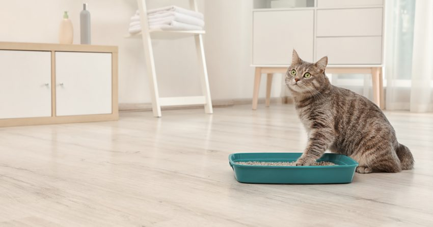Your cat just called us and said he wished you knew about the 7 genius litter box hacks! They'll make your life so much easier. Take a look!
