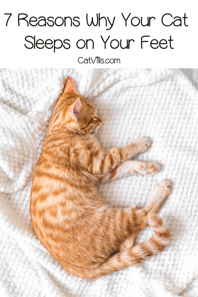 Does it baffle you as to why you cat sleeps on your feet instead of cuddling with you? Then read on for the answers to this strange cat behavior!