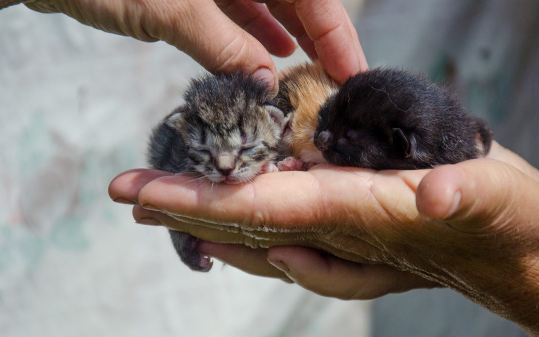 How Can You Tell How Old a Kitten Is? Follow These 8 Tips!