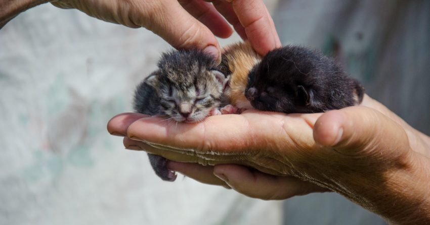 How can I tell how old a kitten is? If you found an abandoned kitty, these tips will help you determine the age. Check them out!
