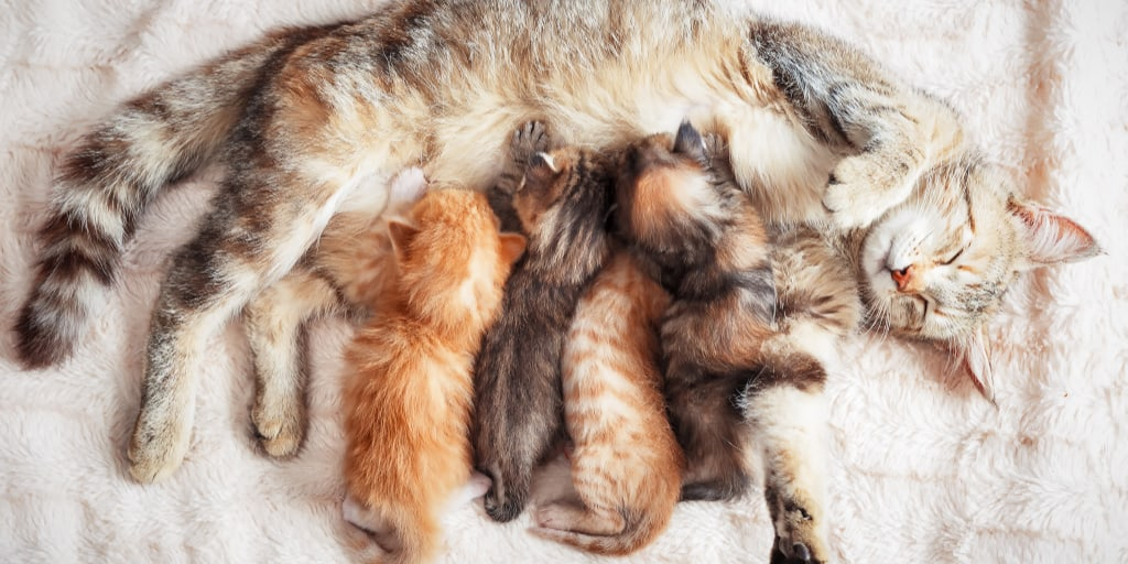 Worried that your mother cat is rejecting her kittens? Think she's ignoring them too much? Read on for 7 reasons why this can happen.