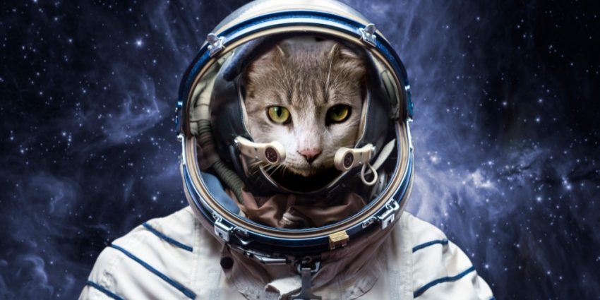 Astronomy and astrology buffs, take note! We're sharing 98 of the coolest space cat names for your little boy or girl kitten. Take a look!
