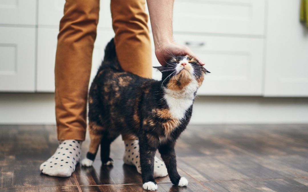 10 Meaningful Ways to Bond With Your Cat & Build Trust