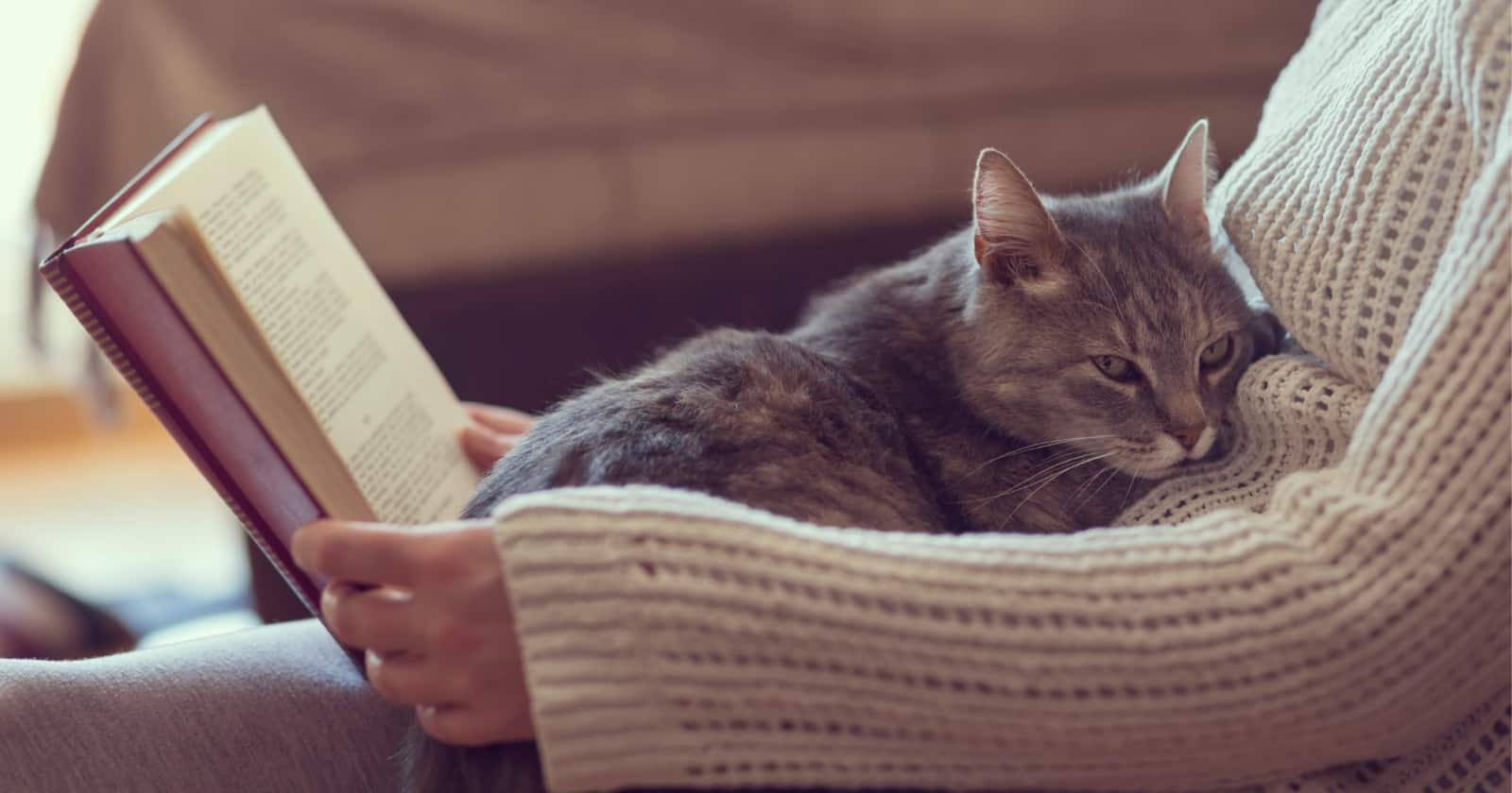 Building a trusting relationship with your kitty takes time, but these 10 ways to bond with your cat can help make it go a lot smoother.