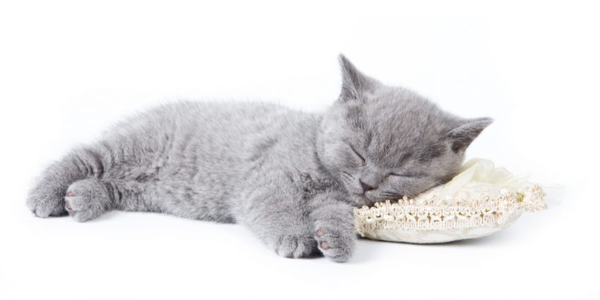 Ever wonder why your cat sleeps on your pillow? For such a seemingly mundane question, there actually are some intriguing answers! Check them out!