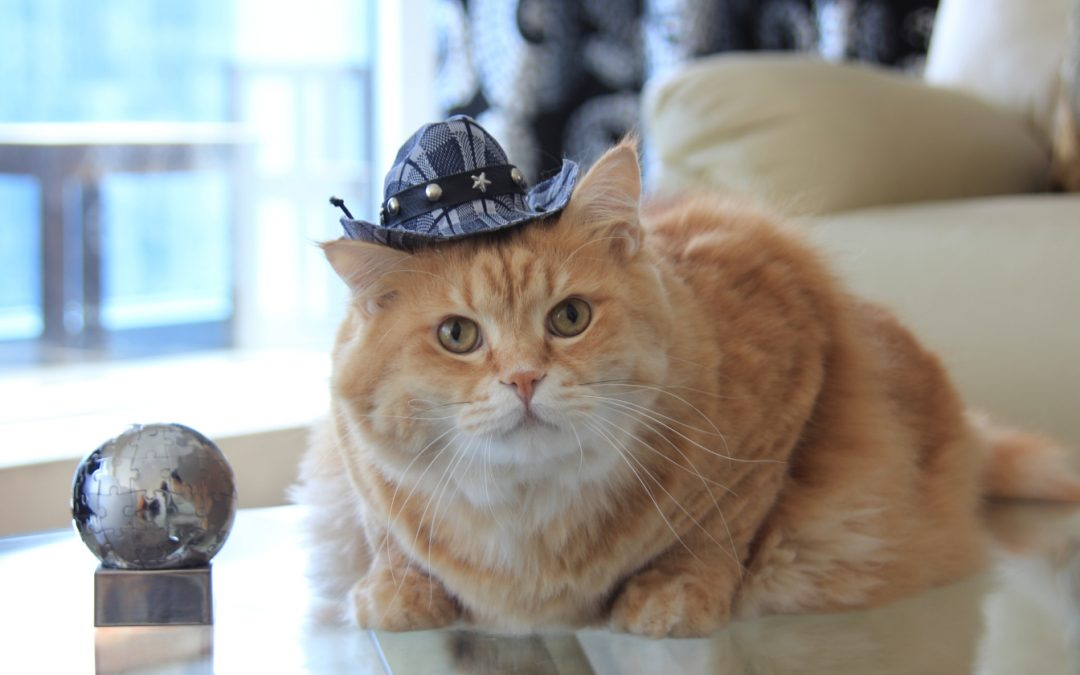 98 Cute Cowgirl & Cowboy Cat Names