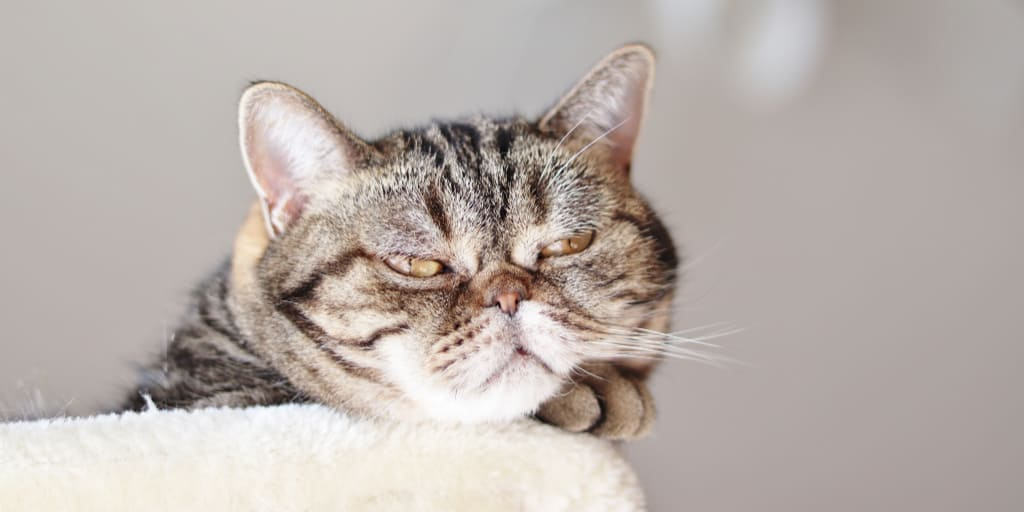 10 Signs of an Unhappy Cat That Every Pet Parent Should Know