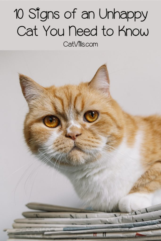 Every good pet parent should know these signs of an unhappy cat! Learn what they are, plus discover the reasons behind kitty's grumpiness!
