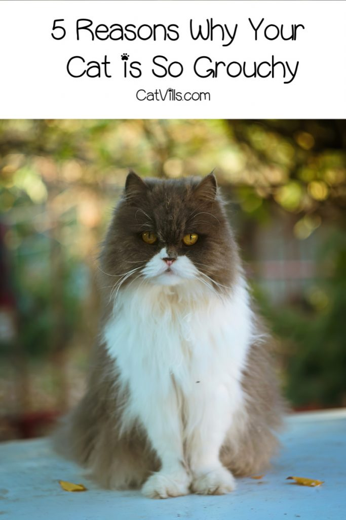 What has your cat in such a bad mood? Learn the top 5 reasons behind an unhappy cat!