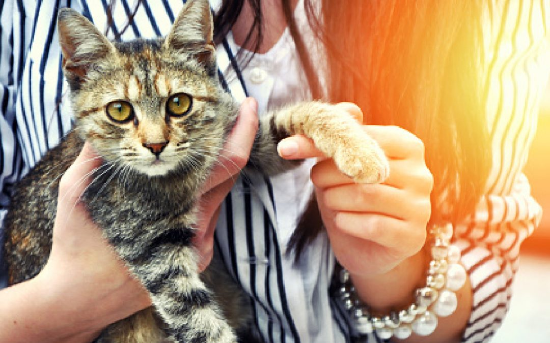 7 Ways Cats Ask For Help& What They're Trying to Tell You
