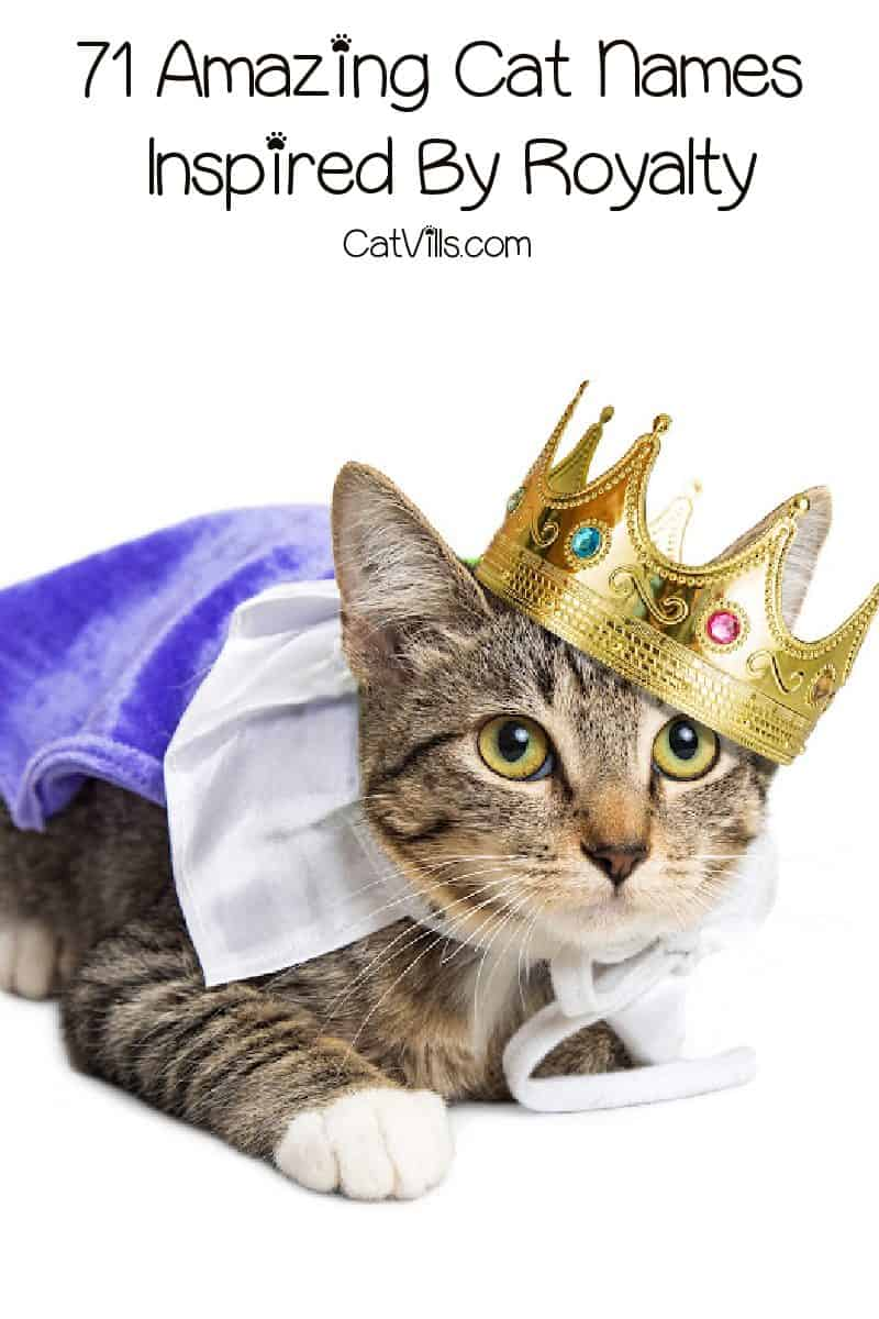 Looking for wonderfully regal cat names inspired by royalty? Check out 71 that we love from modern and ancient history!