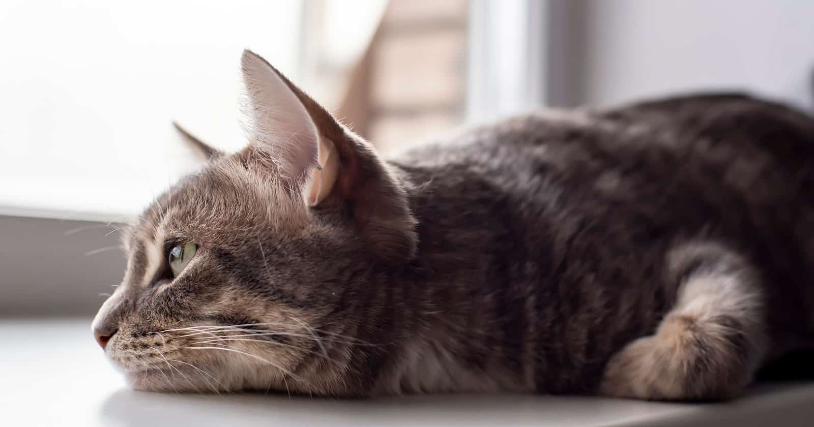 Read on to find out how to prevent separation anxiety in cats. Plus, learn how to treat it if your prevention efforts don't work out.