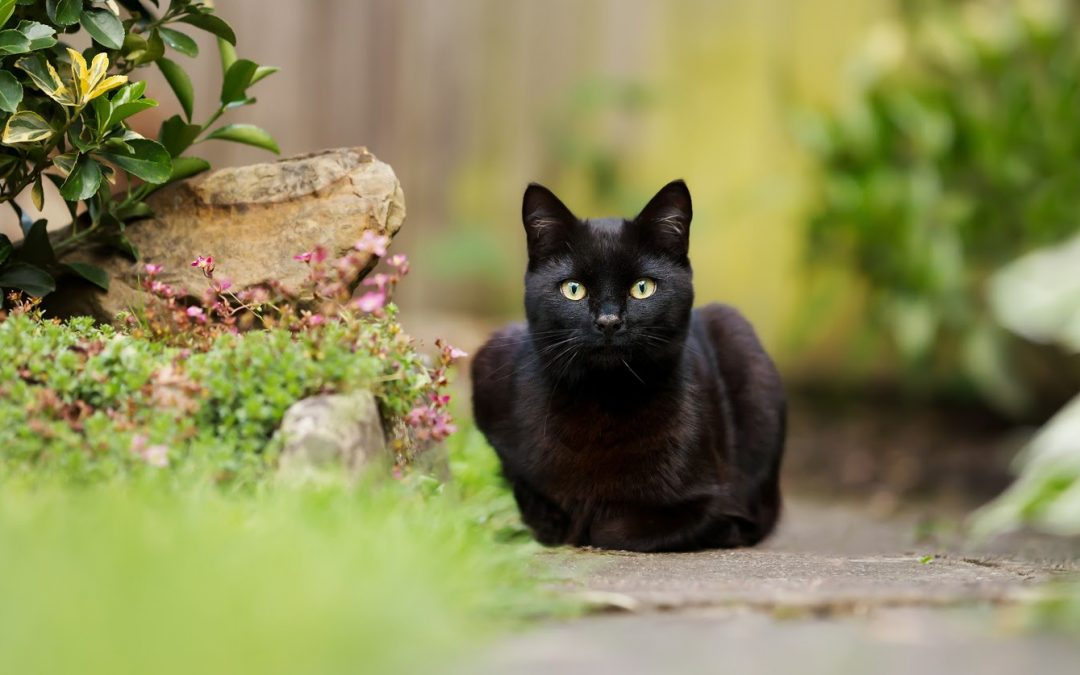 90 Cute & Clever Nature Names For Black Cats