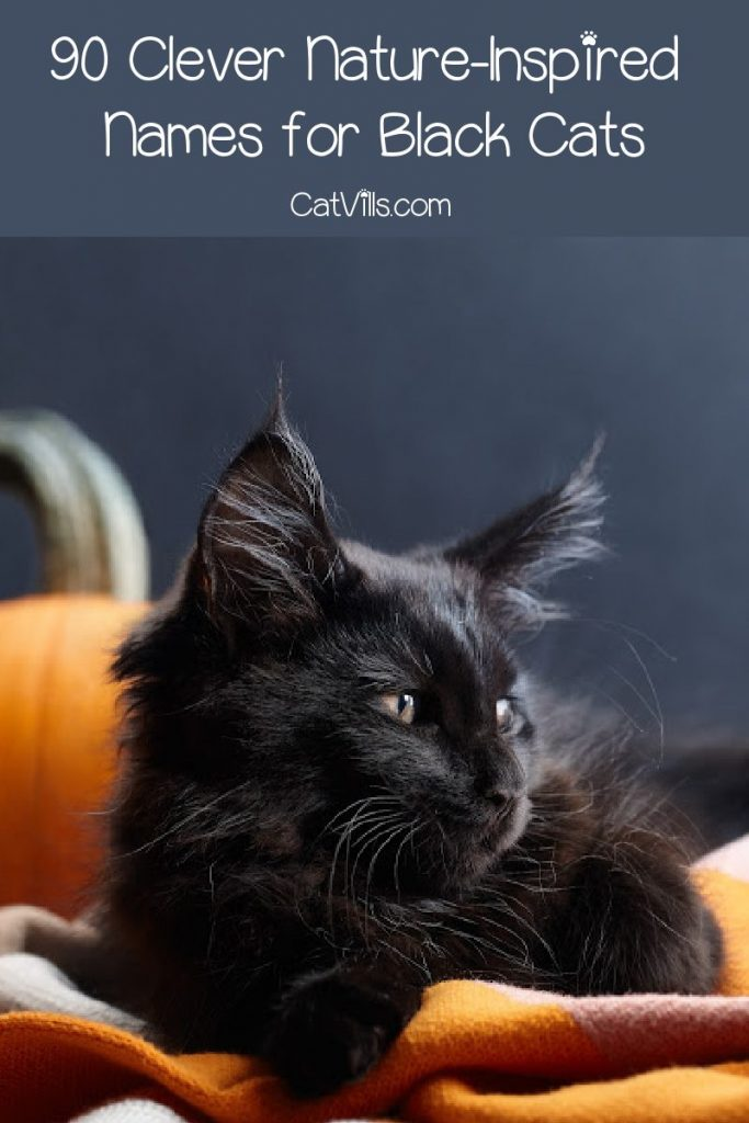 Finding nature names for black cats is not always easy, but we've got you covered! Check out 90 amazing ideas that you'll love!