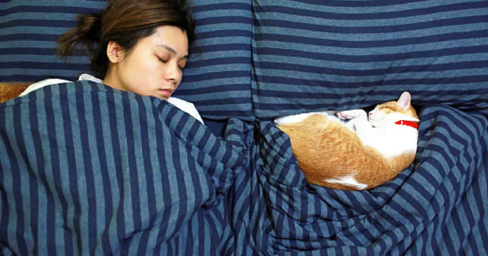 Why do cats like to sleep with their owners? The answers are more intriguing than you might think! Find out what they are!