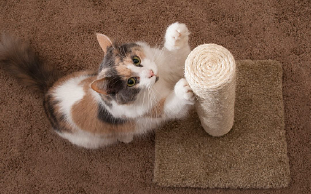 Top 7 Best Scratching Posts for Older Cats (With Complete Reviews)