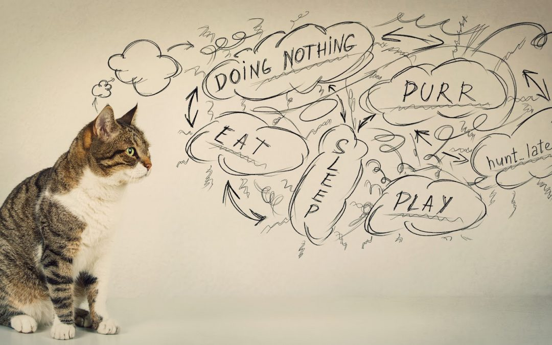 What Is My Cat Thinking? (Your Cat's Innermost Thoughts)