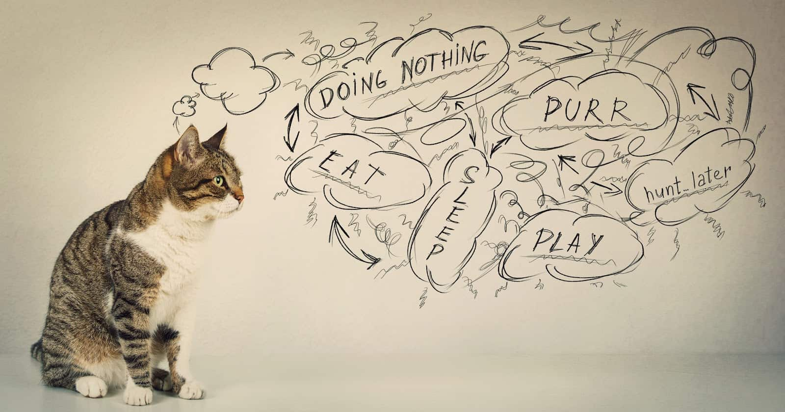 What is my cat thinking? If you're wondering this very question, you'll love our guide to your cat's innermost thoughts!