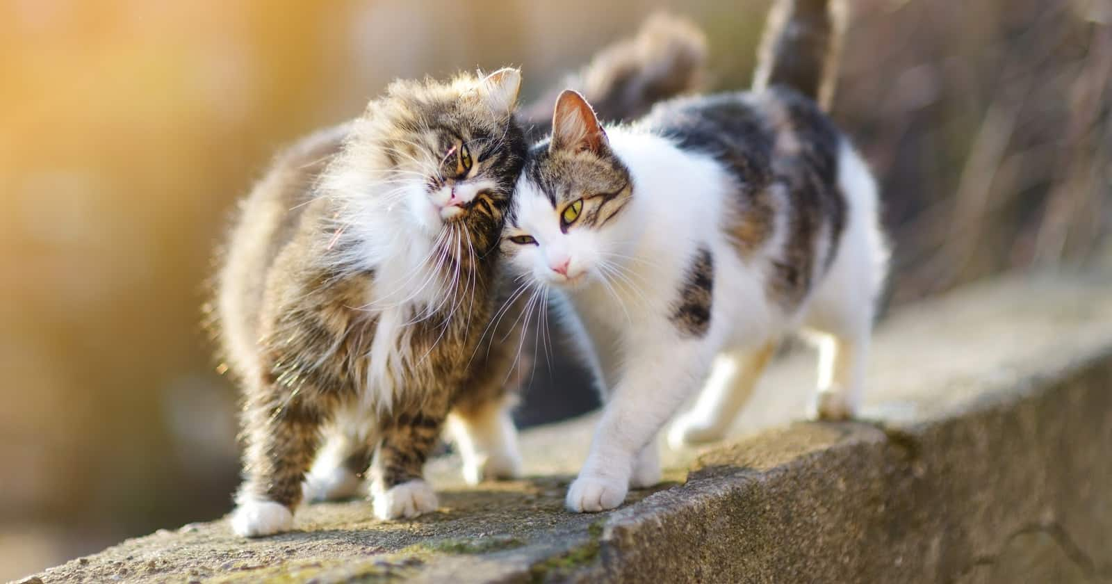 Do cats feel love for other cats? What about their humans? Are they even capable of love at all? Read on to learn the answers!