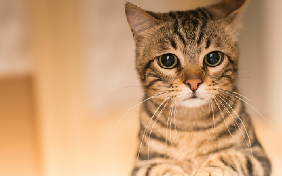 Do Cats Know When You Are Sad or Sense Your Other Emotions?