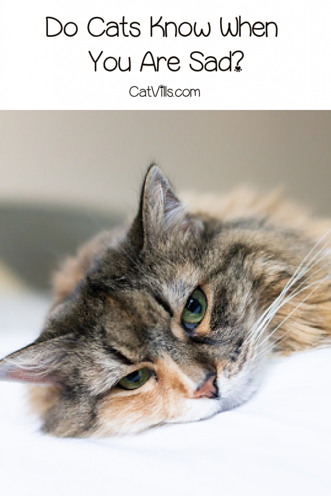 Do cats know when you are sad, or sense your other emotions? Read on to find out the answer to this intriguing cat behavior question!