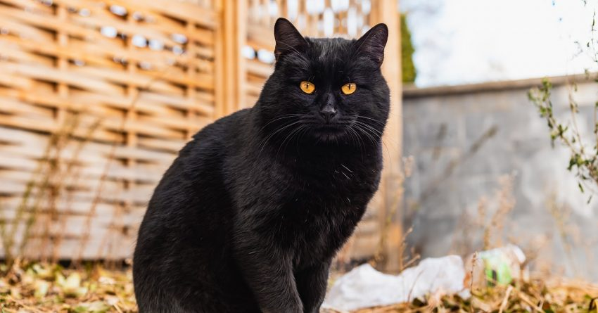 Need some amazing names for cats with gold eyes? Read on! We came up with 100 wonderful ideas, split evenly for boys and girls!