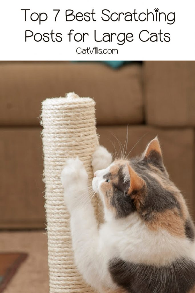 Looking for the best scratching posts for large cats? Check out our top 7 picks, along with what features we look for in one!