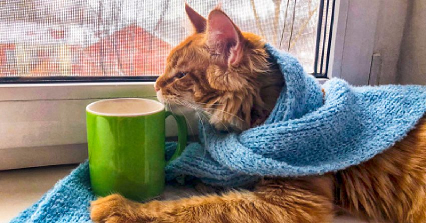 If you're passionate about Oolong and Earl Grey, you'll love these 100 terrific tea names for cats! Check them out!
