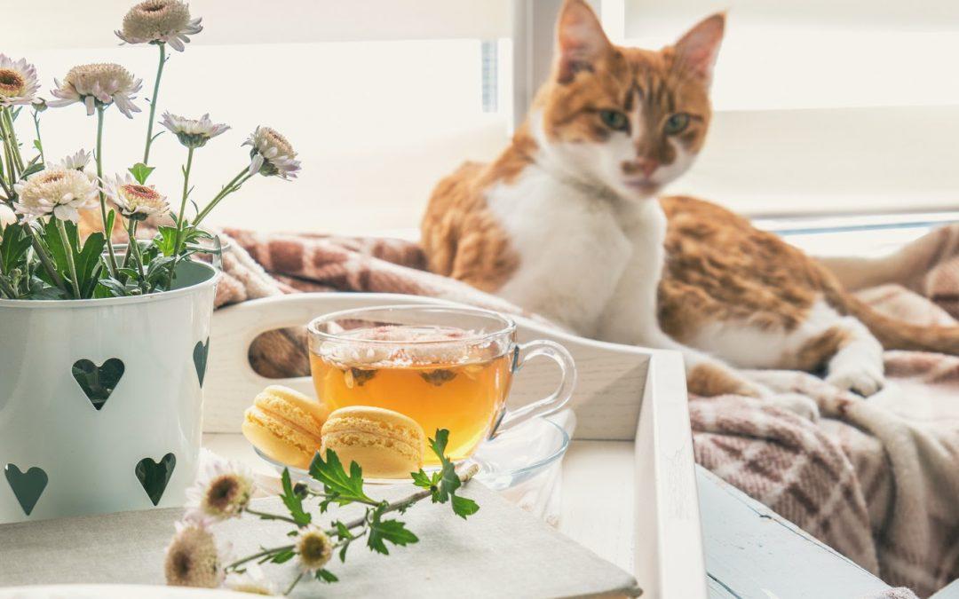 100 Totally Terrific Tea Names For Cats